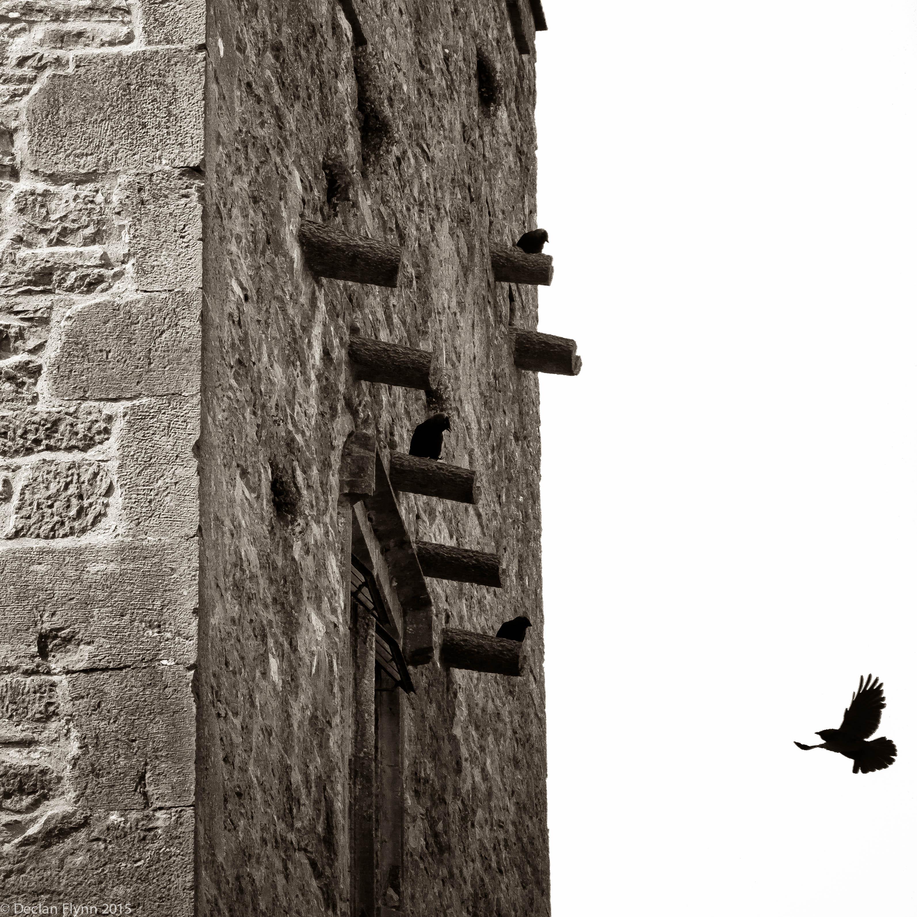 CastleRaven-1