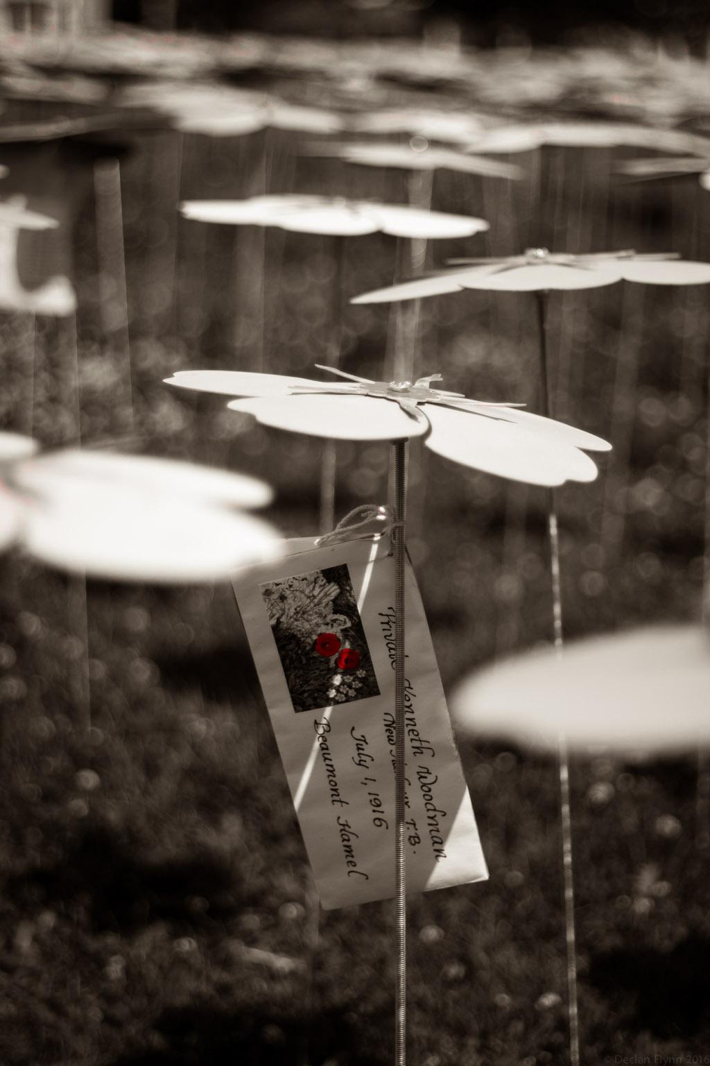 GardenOfTears-1